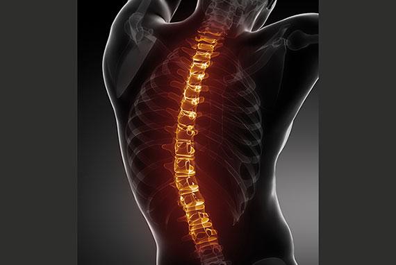 colonna vertebrale fitnesspro