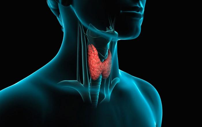 allenamento e tiroide